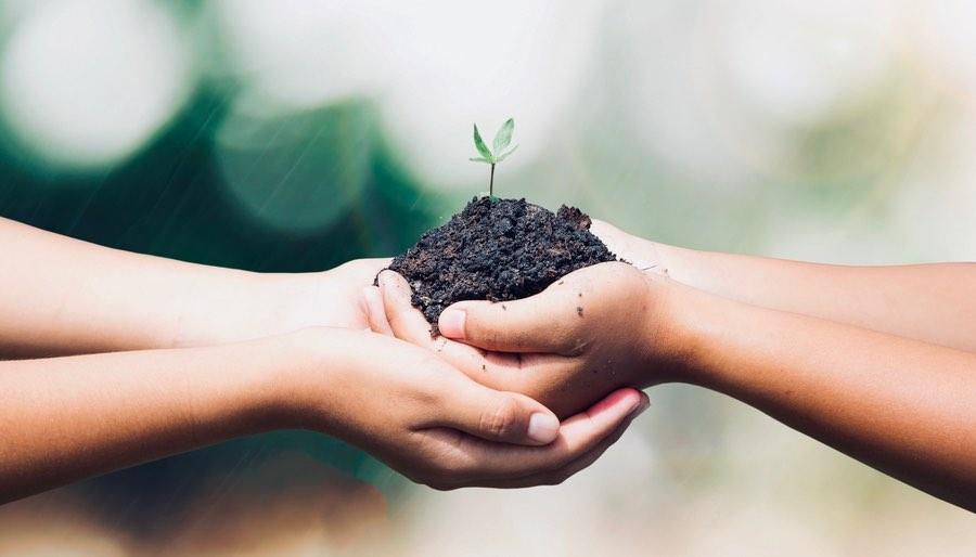 Hands Holding Seedling Nurturing
