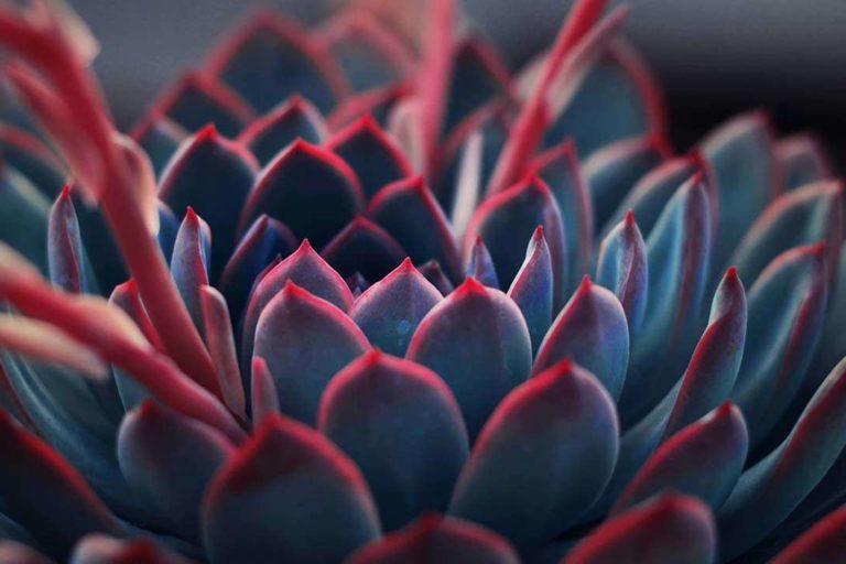 magical-plants-root-chakra