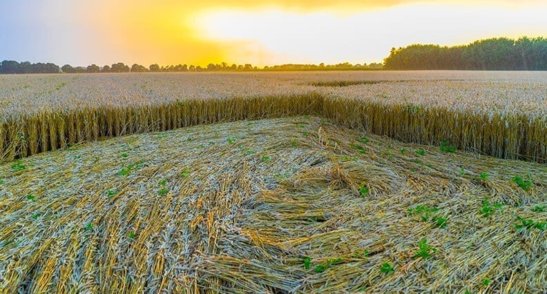 field with crop circles